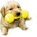 养狗狗 1.2.3