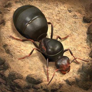 蚂蚁地下王国免费版