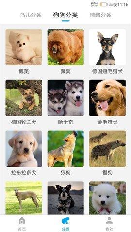 兔子语言翻译器在线