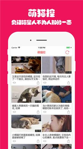 猫主子app下载