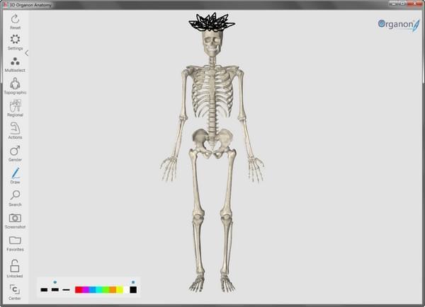 3D Organon Anatomy(人体解剖软件)
