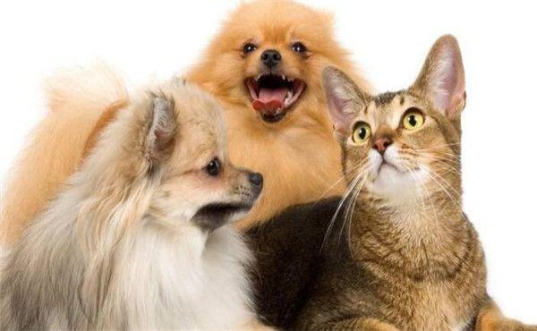 好用的宠物类软件大合集